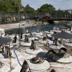 Edinburgh Zoo: A Great Day Out For The Whole Family