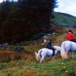 Scotland Horse Riding And Pony Trekking